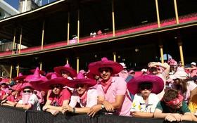 تماشاچیان مسابقات کریکت در استرالیا