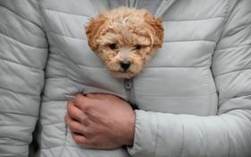 سرما در رومانی