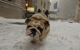 سگی در سرمای شدید نیویورک در آمریکا