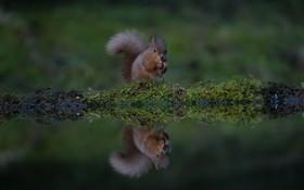 سنجاب در حال بازی گوشی و غذاخوردن