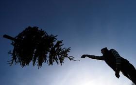 مسابقه پرتاب درخت کریسمس در الیرلند