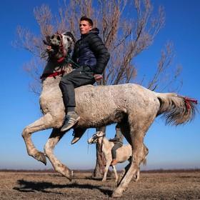 مسابق اسب سواری در رومانی