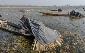 ماهیگیران کشمیری در حال ماهیگری با روشی خاص
