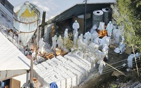 احتمال آلودگی به آنفولانزای مرغی در مرغداری در ژاپن