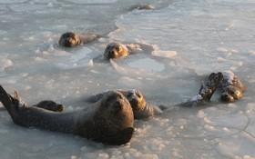 شیرهای دریایی در خلیج شیرهای دریایی در شرق چین در انتظار غذا دادن