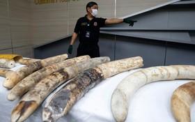 کشف قاچاق عاج فیل در تایلند