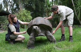 لاکپشت غولپیکر در پارک وحشی در ملبورن استرالیا اندازه گیری می شود