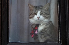 گربه جولین آسانژ در کنار پنجره ای در سفارت اکوادور در انگلیس