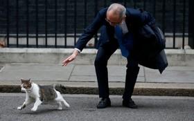 تاجر ژاپنی که در میهمانی نهار نخست وزیر انگلیس شرکت کرده در تلاش برای بازی با گربه دفتر نخست وزیر انگلیس