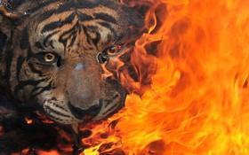 کالاهای قاچاق از حیوانات تاکسی درمی شده و تجهیزات ساخته شده از حیوانات کمیاب در اندونزی سوزانده می شود