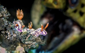 عکس های برگزیده از طبیعت زیرآب سال 2018