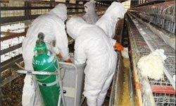 آنفلوآنزای پرندگان ابتلای انسانی در ایران نداشته است