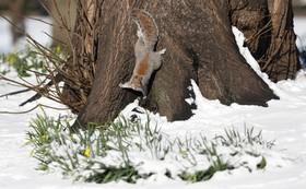 بازی سنجابی در پارک