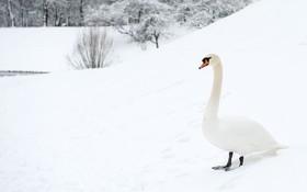 قویی در سرمای