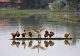 تالابی با پرندگان مهاجر