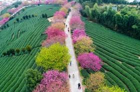 آغاز بهار در منطقه ای در چین