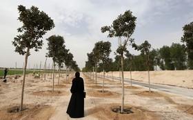 درختکاری اطراف استادیوم های ورزشی بازی های المپیک در قطر
