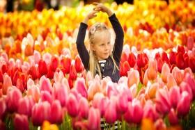 جشنواره باغ کوکنهف هلند، معروفترین باغ گل جهان