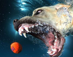 عکس های دیدنی از شیرجه سگ ها در آب