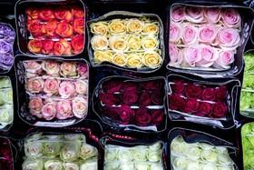 بازار گل در مسکو