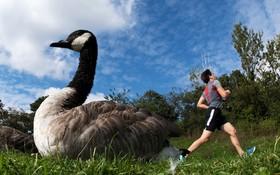 عکس های برگزیده پرندگان در سال 2018