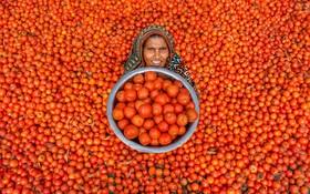 مخزن گوجه فرنگی در بازار هند