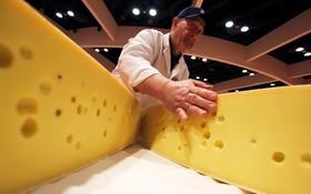 مسابقات جهانی تولید پنیر در نیویورک آمریکا