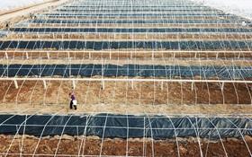 مزرعه ای در چین که با پوشش گلخانه ای در آن کشت می شود
