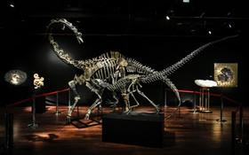 حراج اسکلت های دو دایناسور ژوراسیک مربوط به بیش از 145 میلیون سال قبل در پاریس