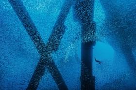 عکس های برگزیده از طبیعت دریایی