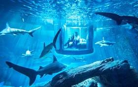 با شگفت انگیزترین اتاق خواب دنیا آشنا شوید +تصاویر