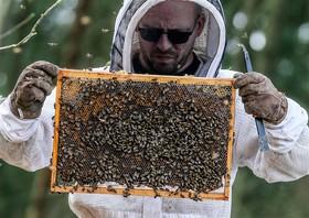 زنبورداری در بلژیک