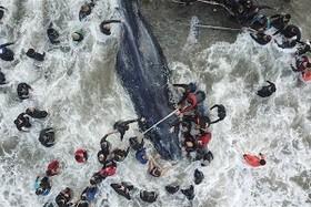 (تصاویر)توربین های بادی دریای شمال ،تصادف اتوبوس در کانادا،شب های پیونگ یانگ و....... در عکس های خبری روز