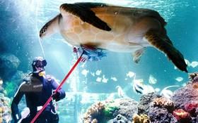 پاکسازی لاکپشت در آکواریوم تیمندورف در آلمان