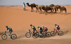 مسابقات دوچرخه سواری در صحرای مغرب