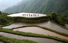 برنجکاری در چین
