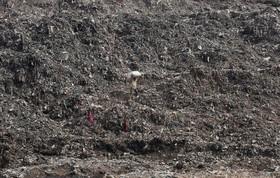 محل انباش زباله در دهلی هند
