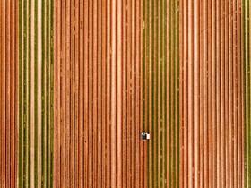 مزرعه گل لاله در آلمان