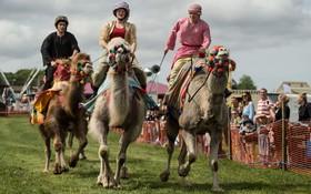مسابقه شترسواری