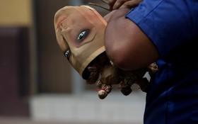 یک تظاهرکننده در نیکاراگوا در ماناگوا در حال حمل ترقه هایی که برای تظاهرات آماده کرده است