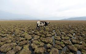 مردابی در شیلی که خشگ شده و کم آب است