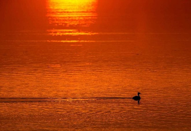 تصویر اب  زن این زن از خورشید فراری است و به آب پناه می برد+ تصویر - ساعت24