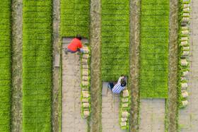 کشاورزی در نانتون چین