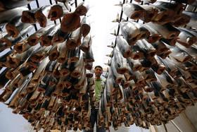 درست کردن ماهی شور در غزه