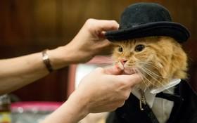 نمایشگاه گربه ها در نیویورک آمریکا