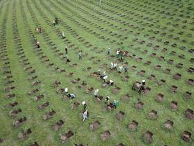 کاشت نهال درخت در یک مزرعه جنگلی در چین