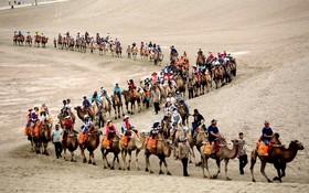 یک گروه جهانگردان در حال شتر سواری در داهانگ