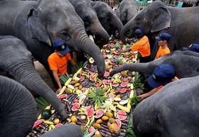 """(تصاویر) پذیرایی از فیل ها در روز جهانی فیل در یک مرکز نگهداری فیل ها در میانمار، توزیع اقلام مصرفی در میان سیلزدگان فیلیپین، شکستن رکورد گینس با درست کردن طولانی ترین ساندویچ """"هات داگ"""" و ... در عکسهای خبری روز"""