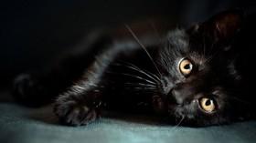 این بیماری وحشتناک از گربه به صاحبش سرایت کرد! + تصاویر