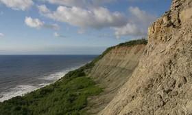 قدیمیترین جانور شناساییشده جهان برای ۵۵۸ میلیون سال پیش است